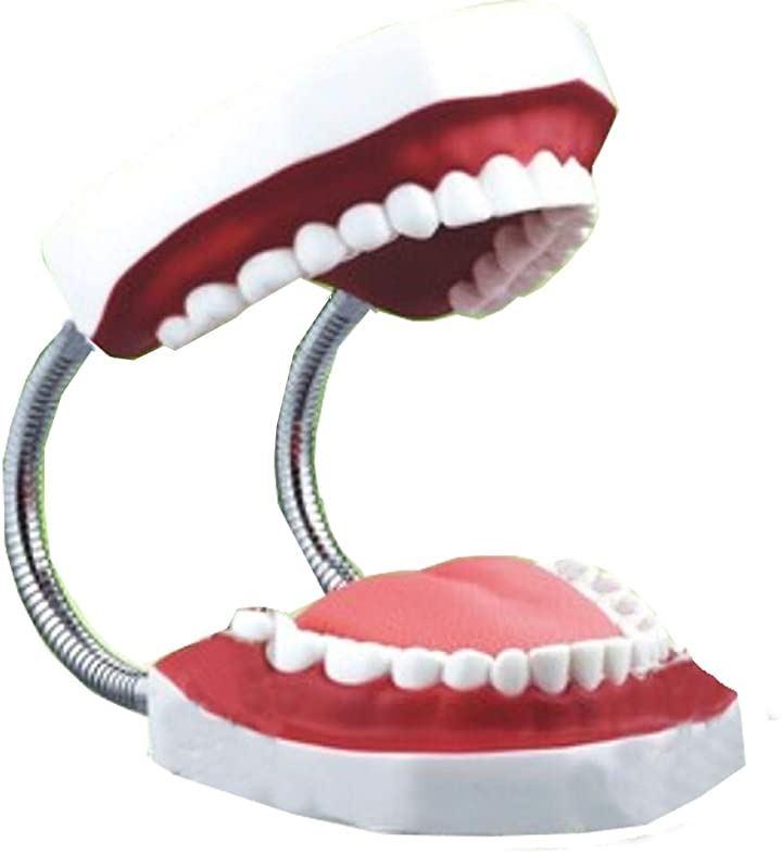 歯型 歯列 模型 歯みがき 指導 練習 説明 デモンストレーション 口腔ケア(白, 143x156mmx高さ103mm)